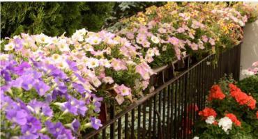 Bezpłatne warsztaty ogrodnicze