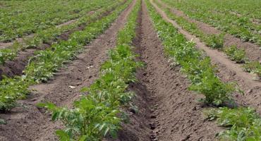 Pomoc rolnikom po przymrozkach