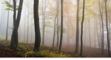 75 letni mężczyzna znaleziony w lesie przez myśliwego!