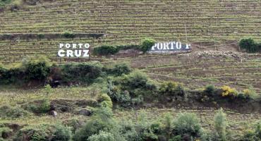 Wino Porto rodzaje – najsłynniejszy trunek Portugalii