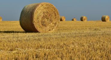 Biuro powiatowe ARiMR przyjmuje wnioski o pomoc suszową