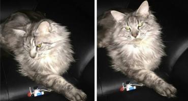 [AKTUALIZACJA] Wasze Info: Pod Ciechanowem zaginął kot. Dla znalazcy przewidziano nagrodę