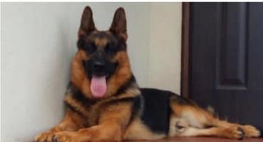 Wasze Info: W gminie Glinojeck zaginął pies [AKTUALIZACJA]
