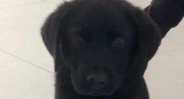 Wasze Info: Pod Ciechanowem zaginął pies. Właściciele apelują o pomoc