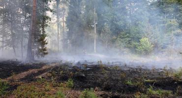 Płonął las. Policja szuka podpalacza