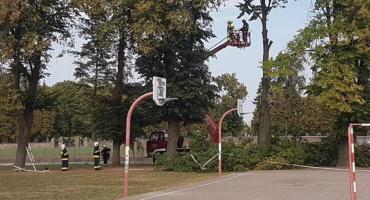 Pęknięte drzewo przy szkole zagrażało uczniom [zdjęcia]