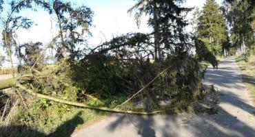 Powalone drzewo blokowało drogę w pow. ciechanowskim [zdjęcia]