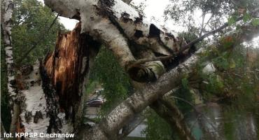 Silny wiatr łamał drzewa w powiecie ciechanowskim
