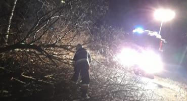 Drzewo runęło na drogę w powiecie ciechanowskim