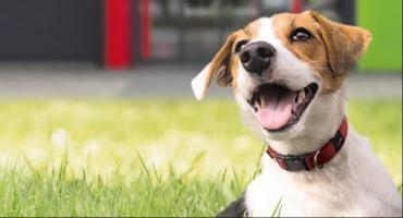 W Toruniu odbędzie się niepowtarzalne spotkanie ze zwierzęcym behawiorystą