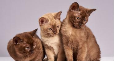 W Toruniu odbędzie się specjalne wydarzenie dla miłośników zwierząt