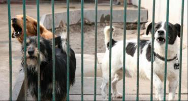 Przetarg rozstrzygnięty. Znamy operatora schroniska dla zwierząt w Toruniu