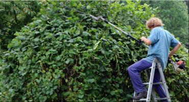 Kwiaty, drzewa, zioła i sadzonki. W Toruniu poznamy najnowsze trendy ogrodnicze