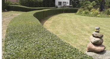 Oto najpiękniejszy ogród w gminie Łysomice [FOTO]