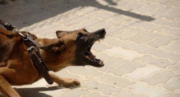 Agresywny pies zaatakował kobietę w Toruniu