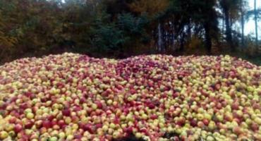 Jabłkowy dramat