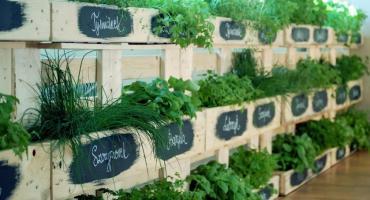 Aromatyczne zioła w domu!